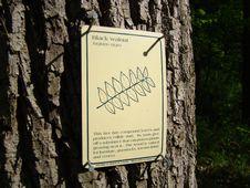 Free Oldtown Creek Preserve Stock Image - 93948191
