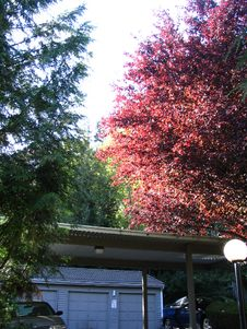 Free Trees Above Garages Stock Photo - 93948330