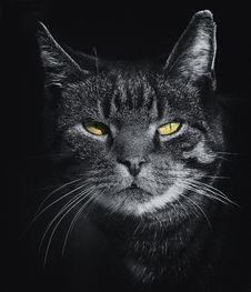 Free Feline Portrait Stock Photos - 93949203