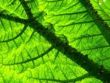 Free Leaf, Vegetation, Plant, Biome Royalty Free Stock Photo - 93949535