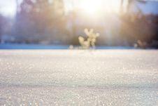 Free Sky, Freezing, Winter, Sunlight Royalty Free Stock Photo - 93949645