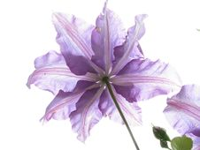 Free Flower, Violet, Purple, Lilac Royalty Free Stock Image - 93949786