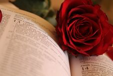 Free Red Rose On Open Book Stock Photo - 93999510