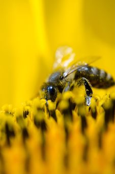 Free Gray And Black Bee On Yellow Flower Stock Photos - 93999513