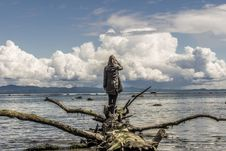 Free Woman On Driftwood Royalty Free Stock Photo - 93999515