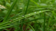 Free Dew Drops On Green Grass Royalty Free Stock Photography - 93999537
