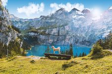 Free Dog On Bench By Alpine Lake Stock Image - 93999591