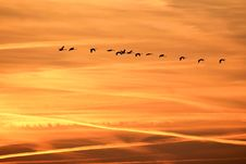 Free Flock Of Birds Flying At Sunset Royalty Free Stock Images - 93999629
