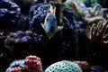 Free Fish Aquarium Stock Photography - 940342