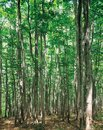 Free Shadows And Tree Royalty Free Stock Image - 944116