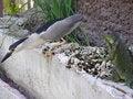 Free Iguana And Bird Stock Images - 945934