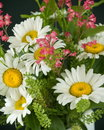 Free Bouquet Of Daisies Royalty Free Stock Photos - 949188