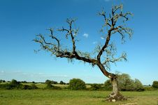Free Tree In Field Royalty Free Stock Image - 940166