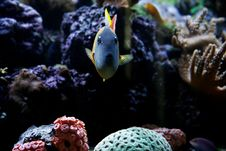 Free Fish Aquarium Stock Photography - 940342