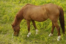 Free Brown Horse Stock Image - 941271