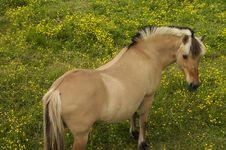 Free Grazing Horse Royalty Free Stock Photos - 941368