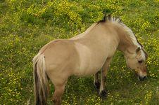 Free Grazing Horse Royalty Free Stock Photos - 941418