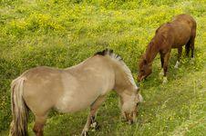 Free Grazing Horses Stock Photography - 941452