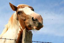 Free Horse Portrait Stock Photos - 942883