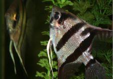 Free Fish Stock Photography - 942892