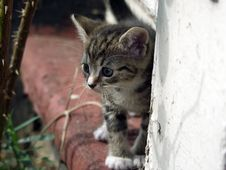 Free Young Kitten - Curious Look Royalty Free Stock Image - 943296