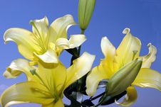 Free Lily And Blue Sky Royalty Free Stock Photos - 943408