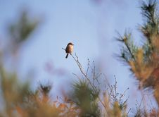 Free Bird On Branch Royalty Free Stock Photos - 943468