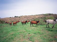 Horses On Grass Stock Image