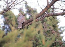 Free Bird At Nature Royalty Free Stock Image - 943746