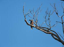 Free Bird With Sky Royalty Free Stock Photos - 943748