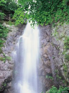 Free Leaves And Waterfalls Stock Photos - 943793