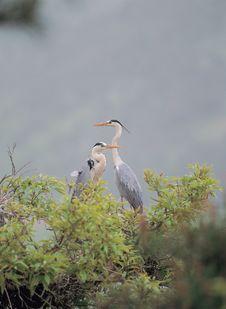 Free Bird And Tree Royalty Free Stock Photography - 943797