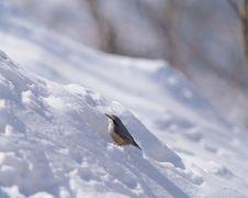 Free Bird And Snow Stock Photos - 943893