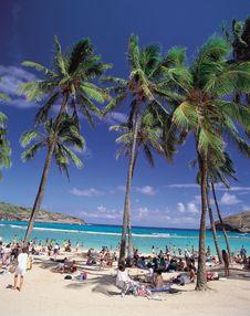 Free Trees On Sand Stock Photos - 943903