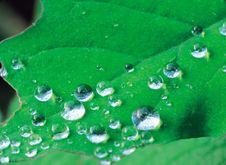 Free Dews On Leaf Stock Images - 944034
