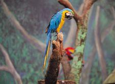 Free Bird By Tree Royalty Free Stock Photography - 944057