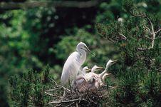 Free Branch Below Bird Royalty Free Stock Photo - 944075