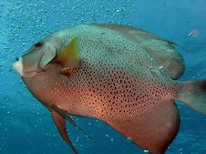 Free Fish Stock Photos - 944623