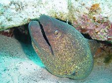 Free Fish Royalty Free Stock Photo - 944625