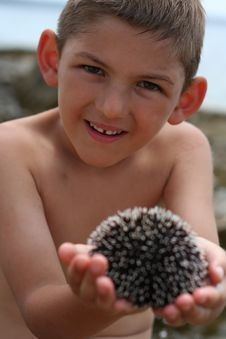Free Holding Sea Urchin Royalty Free Stock Image - 945406