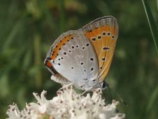 Free Butterfly Royalty Free Stock Photo - 945805