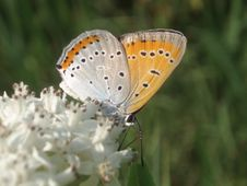 Free Butterfly Stock Photo - 945820