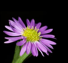 Free Small Purple Flower Stock Photo - 946200