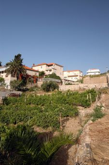Free Vineyard With Houses Royalty Free Stock Photography - 946407