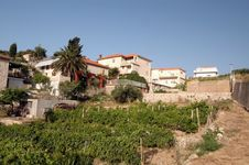 Free Vineyard With Houses Stock Photography - 946412