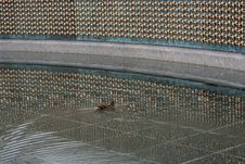 Free Duck Swimming At WWII Memorial Royalty Free Stock Photos - 946548