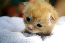 Free Kitten Royalty Free Stock Photos - 946838