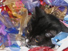Free Kitten Present Stock Photo - 946970