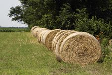 Round Bales In A Row Stock Photo