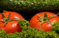 Free Red Tomatoes And A Cucumber On Green Verdure Royalty Free Stock Images - 9405869